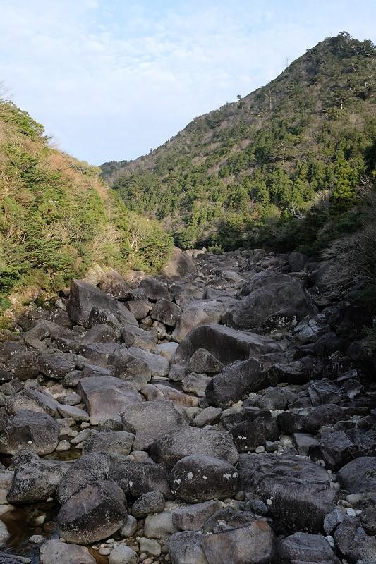 縄文杉に通じる安房川