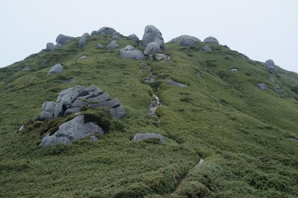 屋久島の登山道