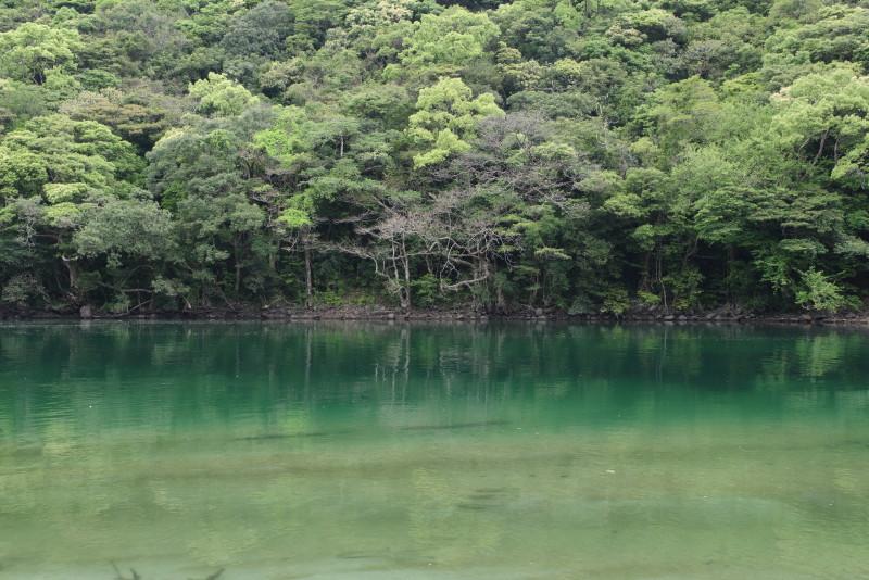 屋久島安房川の新緑とエメラルドグリーンの川色