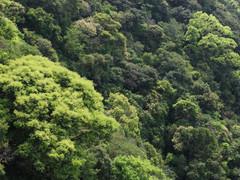照葉樹林の新緑