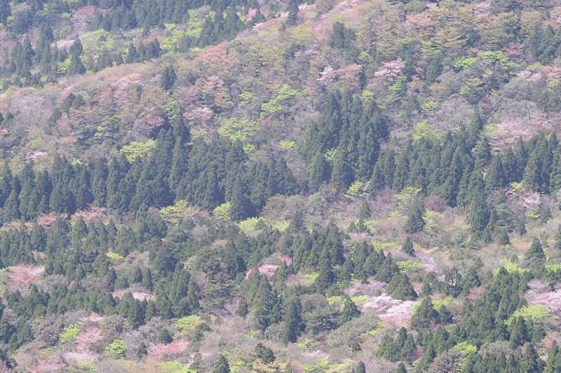 屋久島春におすすめのガイドツアー
