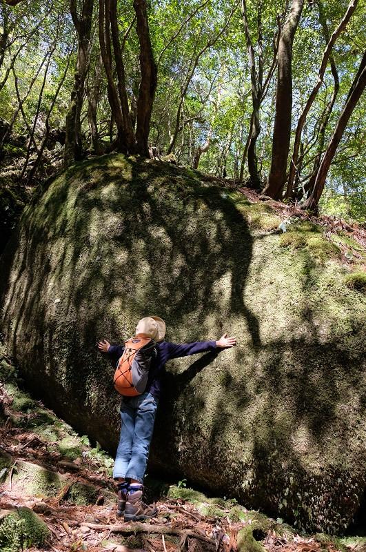 屋久島の森の大きな花崗岩