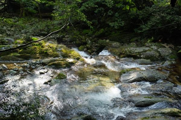 屋久島白谷雲水峡ツアーの川