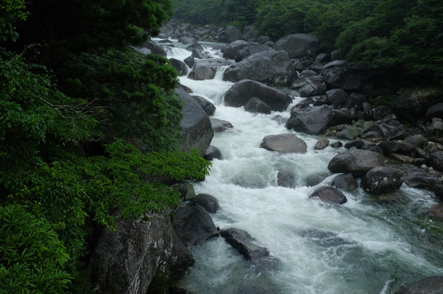 縄文杉コース小杉谷の河原