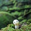 屋久島白谷雲水峡ツアーのコダマ