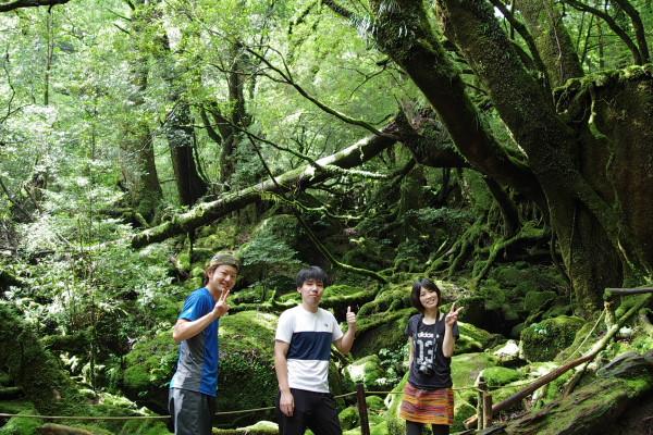 白谷雲水峡の観光地、苔むす森