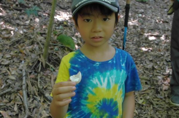 世界自然遺産の森で鳥の卵発見