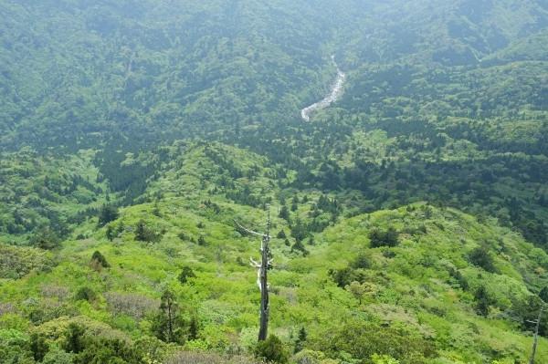 屋久島白谷雲水峡太鼓岩からの展望風景
