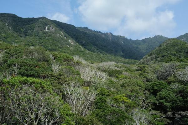 屋久島世界自然遺産の森を展望