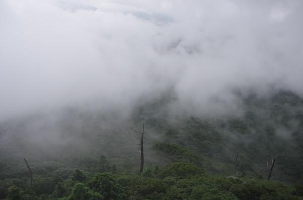 屋久島白谷雲水峡の太鼓岩からの景色