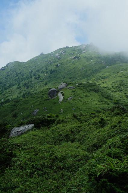 屋久島の山岳部の自然風景