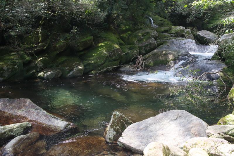 屋久島白谷雲水峡清流