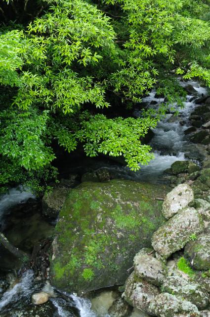 縄文杉コースの鉄橋からの景色