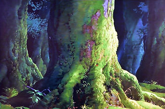 屋久杉の森ともののけ姫の森