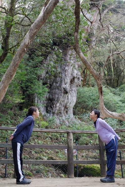 屋久島縄文杉にキス