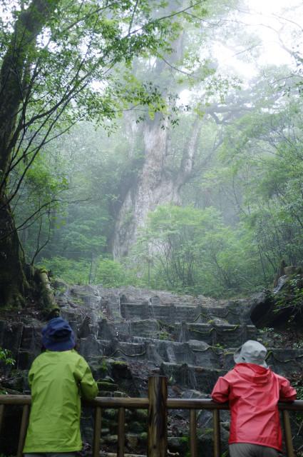 縄文杉と対面