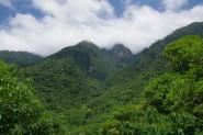 屋久島世界遺産の森