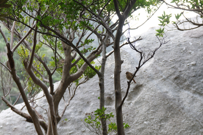 屋久島の鳥ジョウビタキ