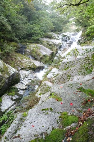 屋久島白谷雲水峡ツアーにて飛流おとし
