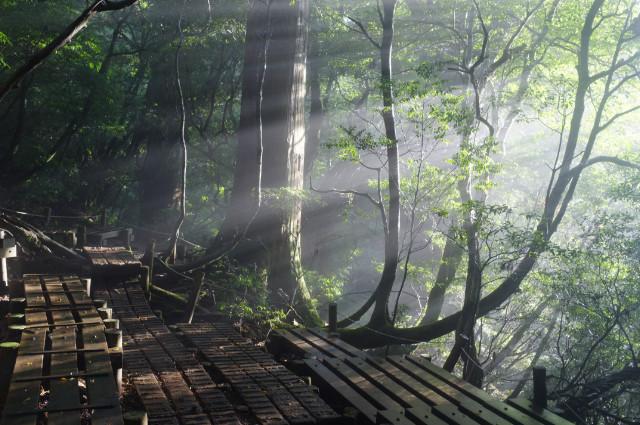 縄文杉ルートの光芒