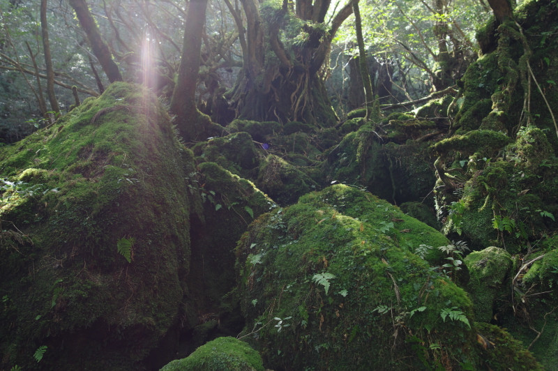 白谷雲水峡木漏れ日