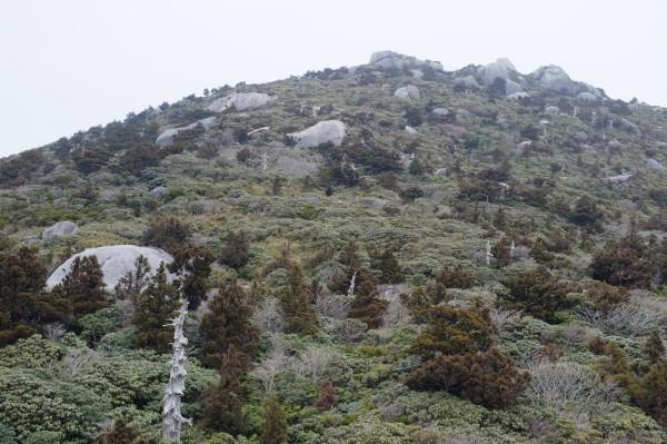 屋久島投石平風景