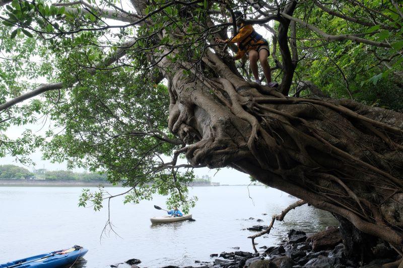 屋久島リバーカヤックガイドツアーで木登り