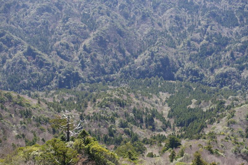 白谷雲水峡太鼓岩からの安房川
