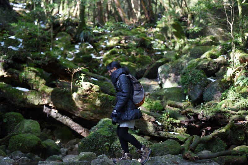 屋久島白谷雲水峡ガイドツアー風景