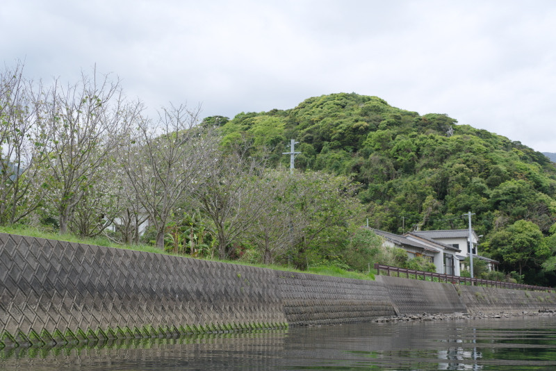 屋久島安房川沿いの桜