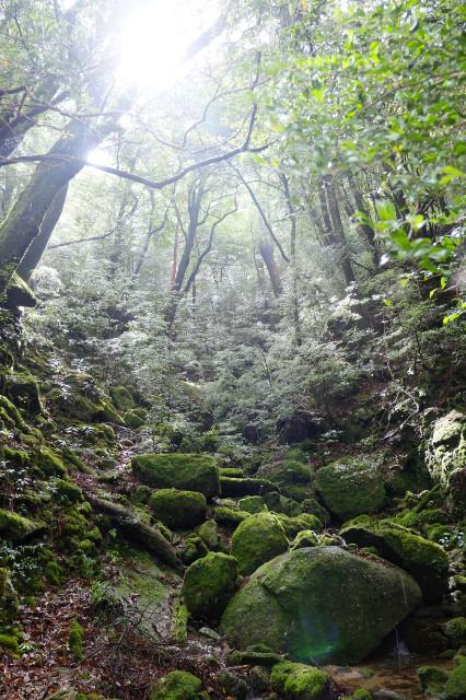 苔むした森はもののけ姫の世界