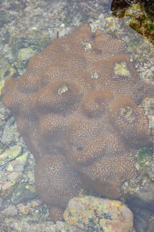 サンゴ・屋久島の生き物