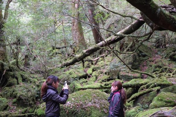 白谷雲水峡苔むす森にて撮影タイム
