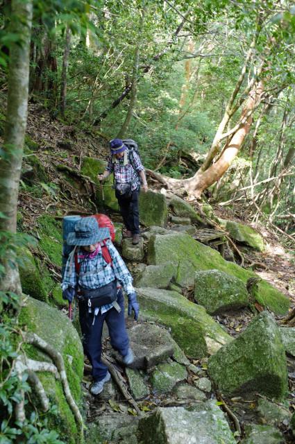 縄文杉コースの登山道