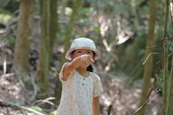 世界遺産の森あるきエコツアー