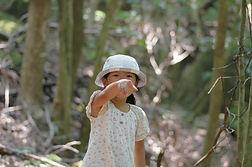 屋久島世界遺産の森あるき西部林道エコツアー