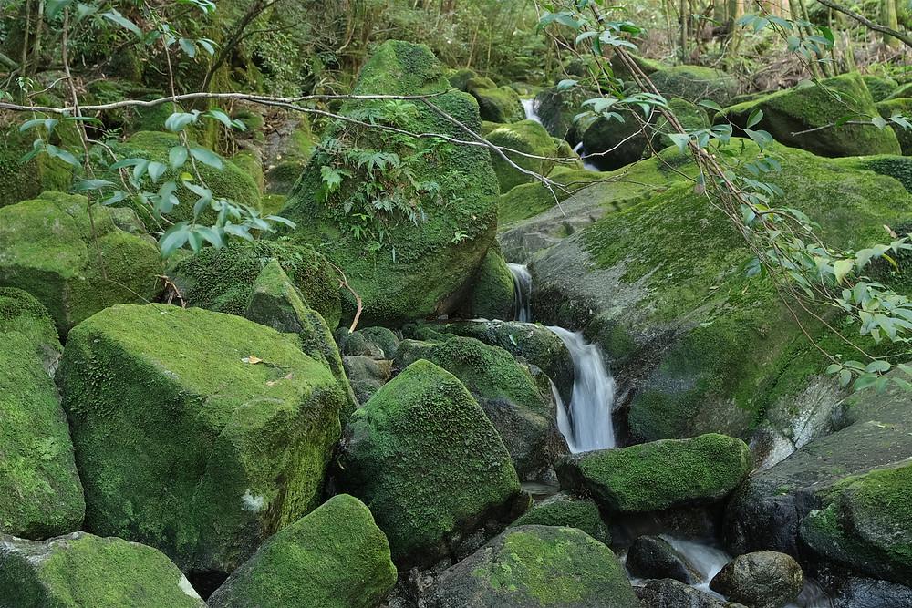 屋久島コケのある風景ツアー
