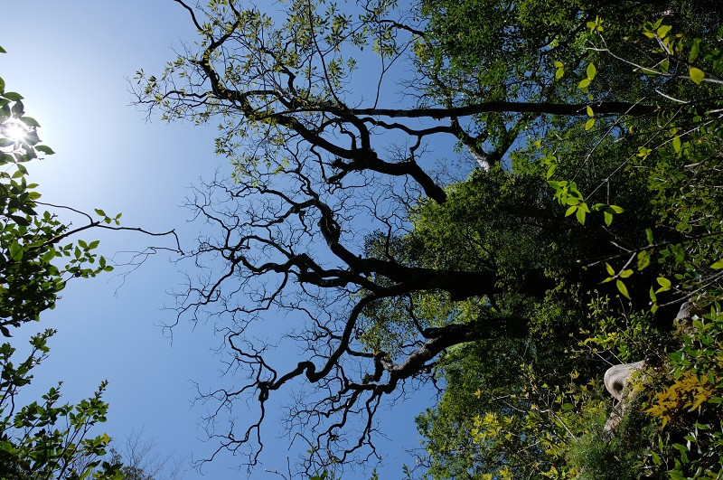 白谷雲水峡の森