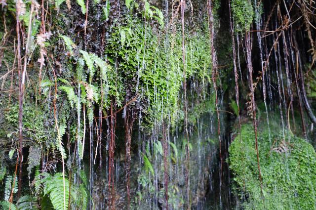 トロッコ道の水滴