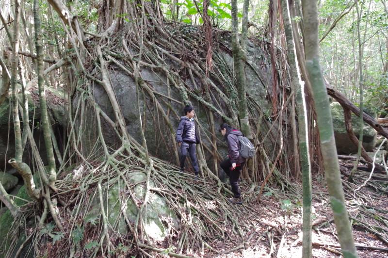 屋久島世界自然遺産のガイドツアー
