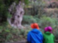 縄文杉と向き合う
