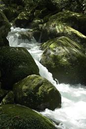 苔むす渓流」