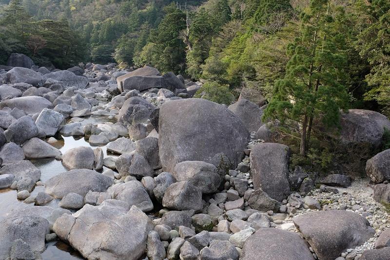 屋久島安房川の花崗岩