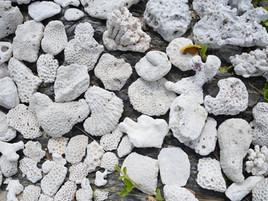 色々な形のサンゴ