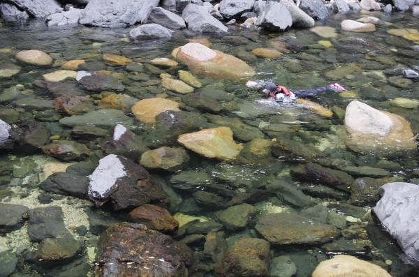 屋久島カヌーツアーで泳いています。