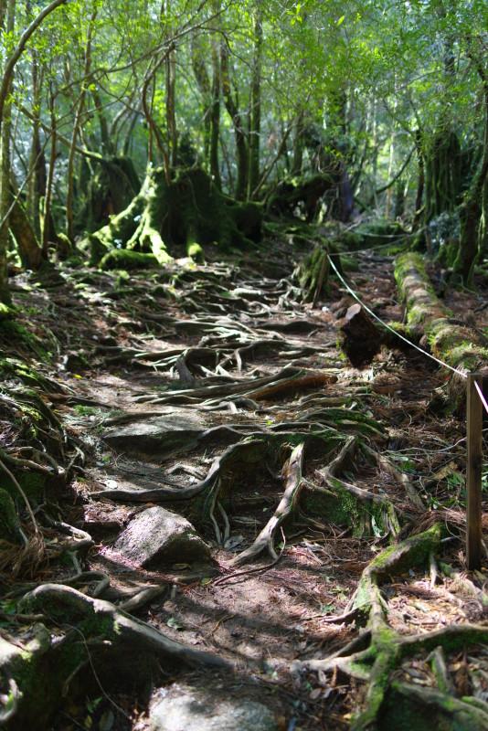 屋久島白谷雲水峡木の根っこ