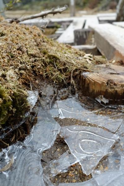 屋久島花之江河の氷