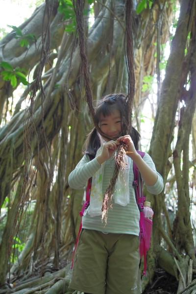 亜熱帯性の植物ガジュマルの気根