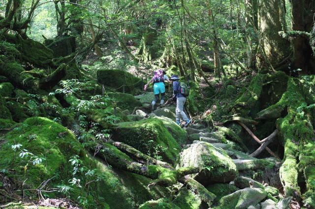 屋久島白谷雲水峡ガイドツアーの風景