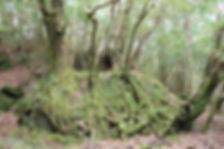 屋久島風の谷のナウシカ、オームの木